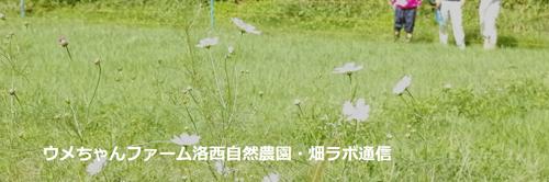 ウメちゃんファーム洛西自然農園・畑ラボ通信