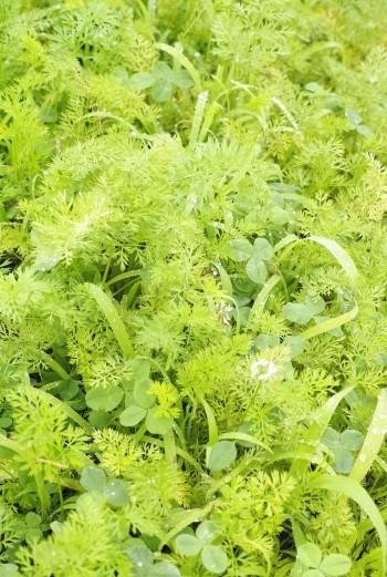 プランター野菜栽培ワークショップ